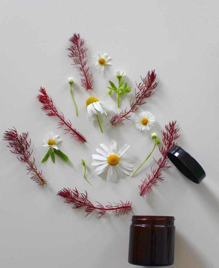 Naturalne kosmetyki roślinne bez zawartości sztucznych substancji