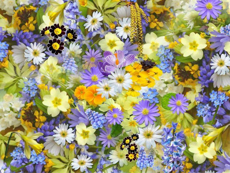 Kwiaty kolekcjonerskie - świetny pomysł na wystrój wnętrza