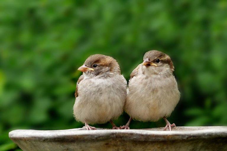 Czy siatka na balkon przeciw ptakom odstraszy je od naszego mieszkania?