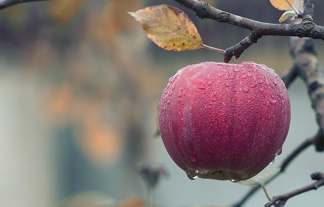 Prawidłowy sposób na długotrwałe przechowywanie jabłek